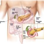 膵臓は胃の裏側にあります。